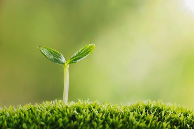 Uma pequena árvore crescendo na grama verde em um jardim com luz solar