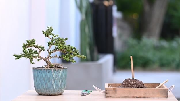 Uma pequena árvore de bonsai em uma panela de cerâmica e ferramentas de poda de bonsai na mesa de madeira.