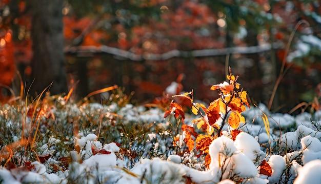 Uma pequena árvore está coberta de neve entre grandes árvores em uma clareira no meio de uma grande floresta densa nas montanhas dos cárpatos. vídeo uhd 4k em tempo real