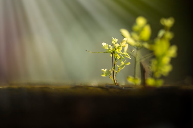 Uma pequena árvore está crescendo sob a luz