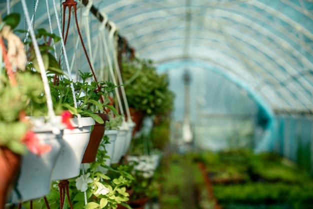 Uma pequena estufa para o cultivo de plantas, arbustos e flores. co-agricultura doméstica na área de origem
