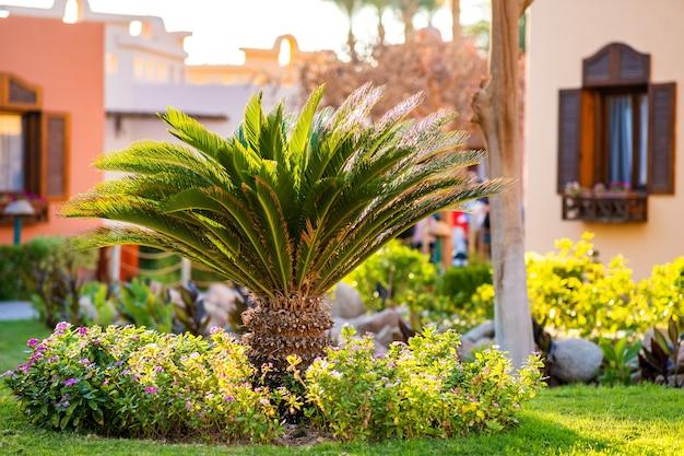 Uma pequena palmeira verde cercada por flores desabrochando brilhantes crescendo no gramado coberto de grama em um pátio tropical