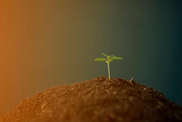 Uma pequena planta de mudas de cannabis na fase de vegetação plantada no solo