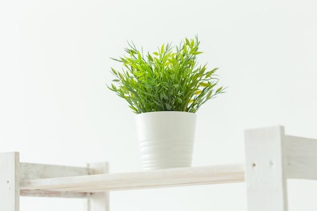 Uma pequena planta verde na prateleira branca. imagem interior.