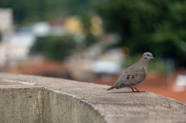 Uma pequena pomba pousada em uma saliência no topo de um edifício.