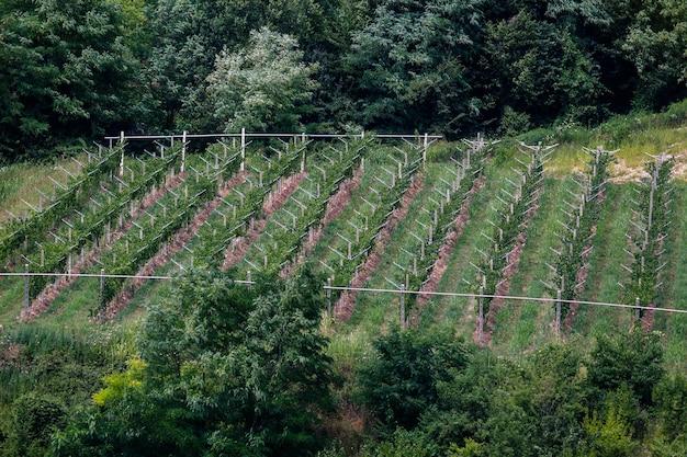 Uma pequena vinícola valpolicella perto de marano, na província de verona