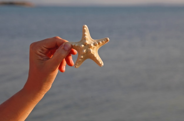 Uma pessoa segurando uma estrela do mar (estrela do mar) em uma mão na praia com fundo de areia em dia de sol. conceito de fundos de férias de verão.