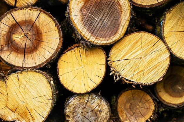 Uma pilha de lenha empilhada. fundo de desmatamento