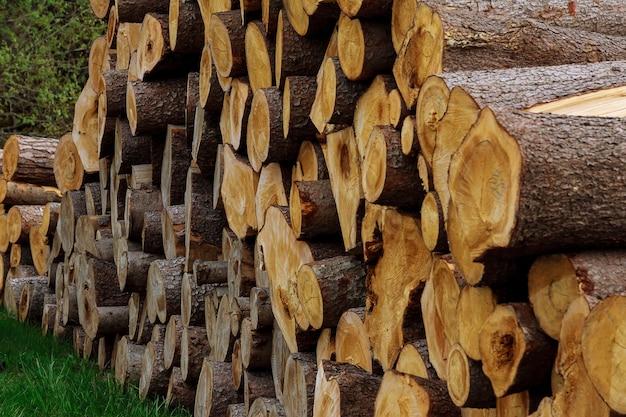Uma pilha de toras de madeira encontra-se na grama perto. o problema do desmatamento. problema ecológico.