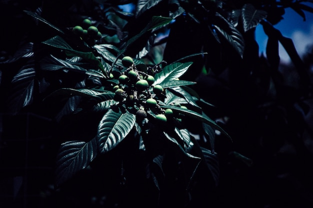 Uma planta bonita no escuro