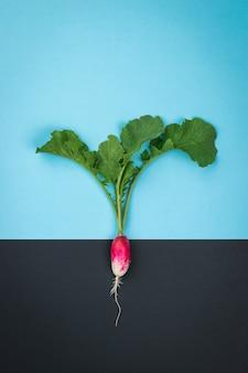 Uma planta de rabanete em uma superfície que simboliza a terra e o céu. o conceito de cultivo de rabanetes.