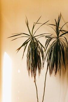 Uma planta em um fundo bege uma tendência elegante