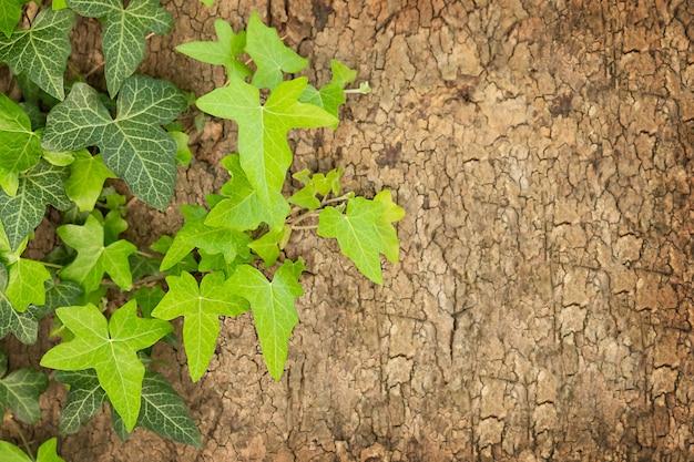 Uma planta verde na casca de um fundo de natureza arbórea