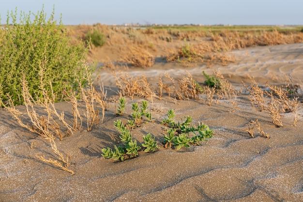 Uma planta verde solitária sobreviveu em um deserto quente