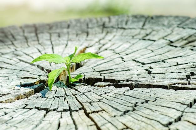 Uma plântula forte crescendo na árvore tronco central como um conceito de apoio à construção de um futuro