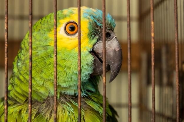 Uma pobre arara verde e amarela em uma gaiola.