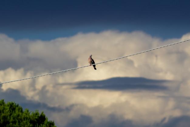 Uma pomba descansando nas linhas de força