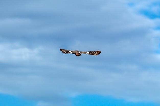 Uma pomba voando no céu com as asas bem abertas