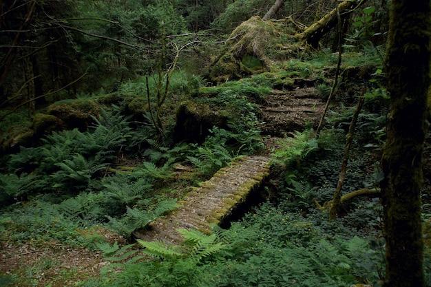 Uma ponte de madeira sobre um riacho em uma floresta verde, coberta de samambaias e musgo