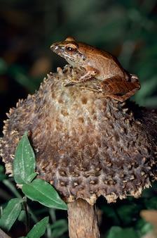 Uma rã descansando em um cogumelo