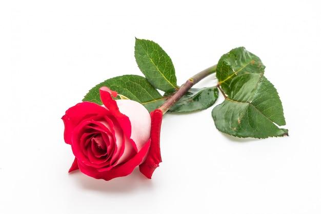 Uma rosa vermelha