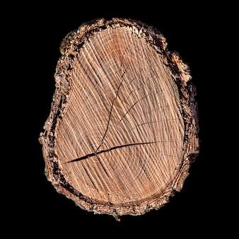 Uma seção de uma árvore está isolada em preto