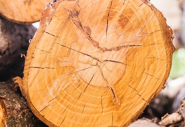 Uma seção de uma árvore. textura de madeira. anéis no tronco da árvore. fundo de madeira.