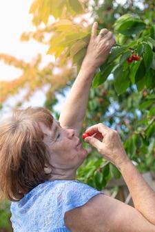 Uma senhora idosa come uma cereja madura, colhendo-a de uma árvore no verão no jardim. vitaminas saudáveis deliciosas.