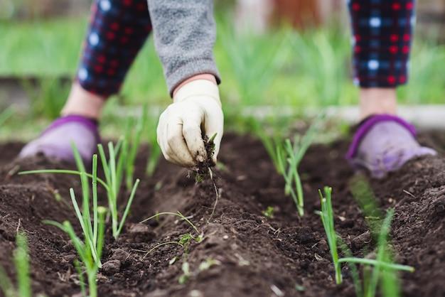 Uma senhora idosa está plantando mudas de cebola jovens em seu jardim na aldeia