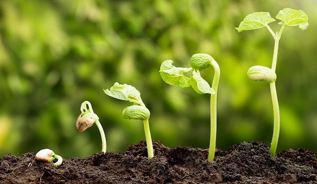 Uma sequência de mudas crescendo progressivamente mais altas na sujeira com fundo desfocado.