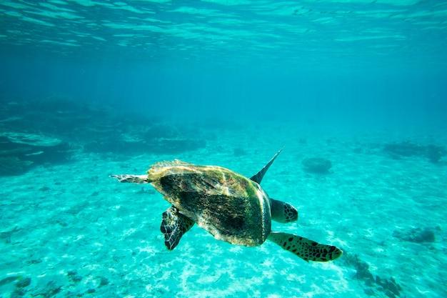 Uma tartaruga sentada em corais sob a superfície da água