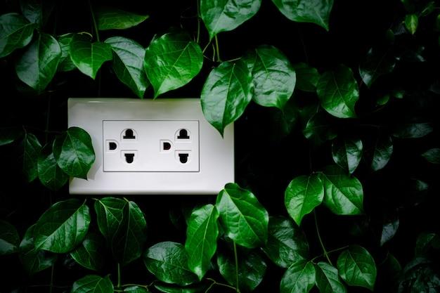 Uma tomada elétrica doméstica branca em uma parede de folhas.