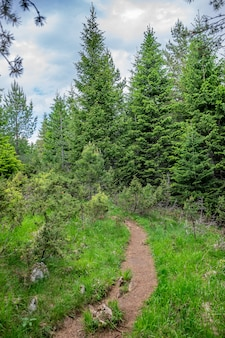 Uma trilha sinuosa atravessa a floresta entre as altas montanhas.