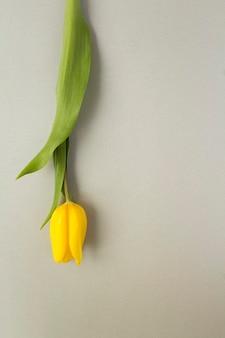 Uma tulipa amarela no fundo cinza. copie o espaço. localização vertical.