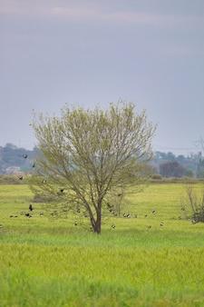 Uma única árvore com pássaros em um campo verde
