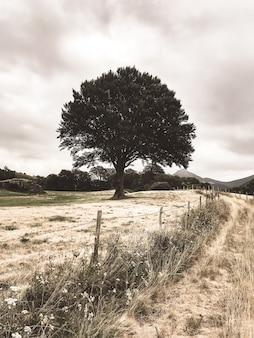 Uma única árvore em um campo. fotografia colorida vintage