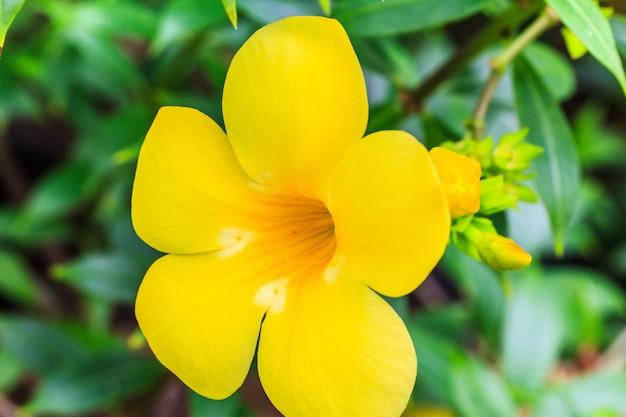 Uma única flor amarela