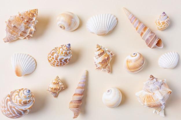 Uma variedade de conchas do mar em bege.
