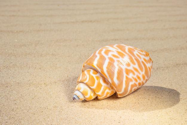 Uma variedade de conchas está na areia. o conceito de férias de verão no mar. praia de areia.