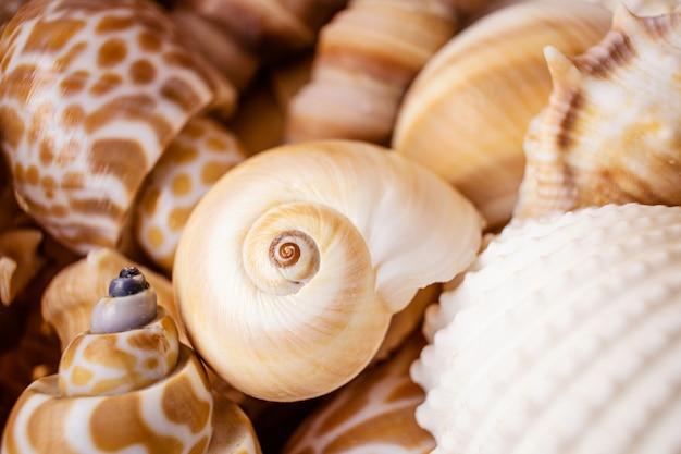 Uma variedade de conchas. o conceito de férias, mar, verão, viagens, decoração. vista superior, plana leigos, copyspace.