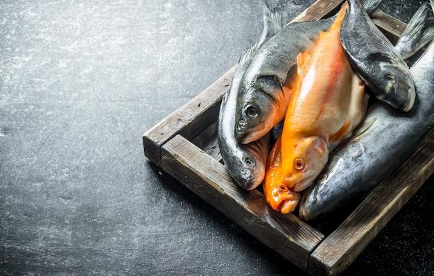 Uma variedade de peixes frescos em uma bandeja. em rústico escuro