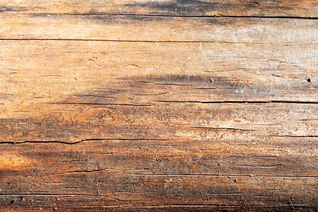 Uma velha árvore seca, comida por um besouro de casca, sem uma camada superior de casca