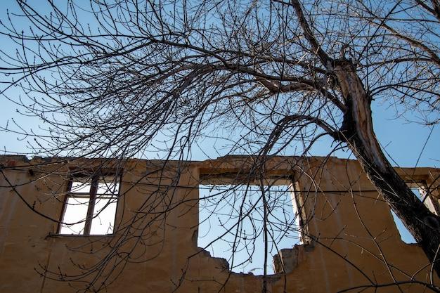 Uma velha árvore sem gelo no contexto das ruínas de um edifício rosa, janelas sem vidro. dia claro, céu azul. o conceito de interação de paisagens naturais e industriais