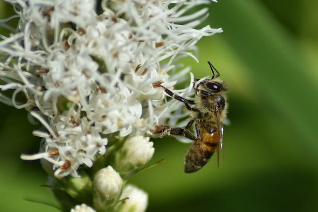 Uma vespa sentada em uma flor no jardim