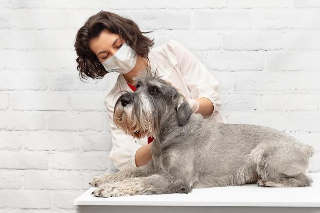 Uma veterinária com uma máscara protetora examina um cachorro durante uma consulta na clínica