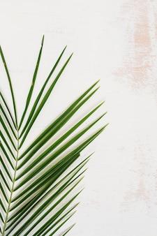 Uma visão aérea do padrão de folha verde palm na parede branca