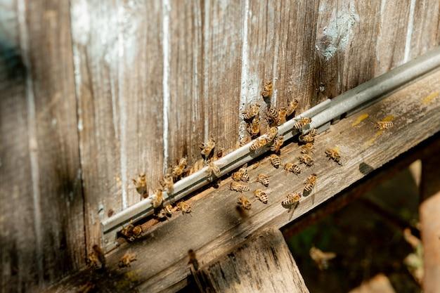 Uma visão aproximada das abelhas trabalhando trazendo pólen das flores para a colmeia em suas patas