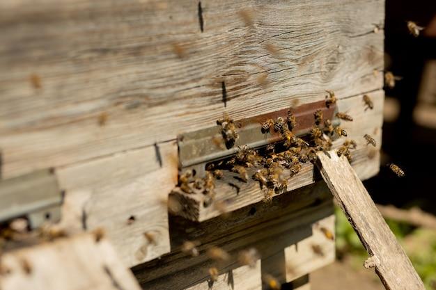 Uma visão de close-up das abelhas trabalhando trazendo pólen de flores para a colmeia em suas patas.
