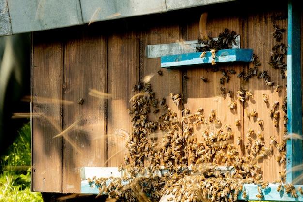Uma visão de close-up das abelhas trabalhando trazendo pólen de flores para a colmeia em suas patas