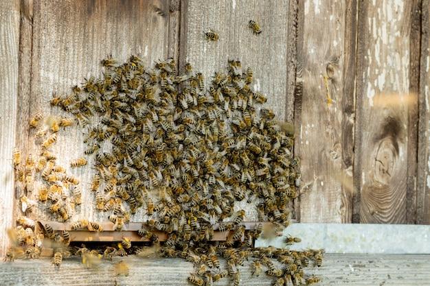 Uma visão de perto das abelhas trabalhando trazendo pólen das flores para a colmeia em suas patas